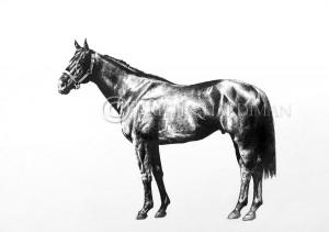 Lohnro equine art kristin hardiman