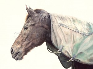 equine art Zabeel kristin hardiman