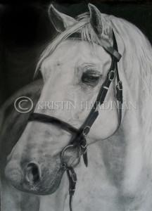 Australian Pony 2